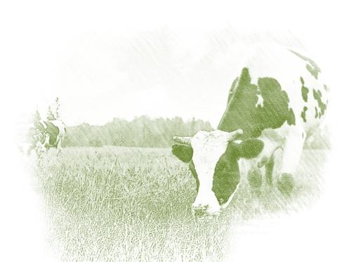 Кормовые травы и травосмеси
